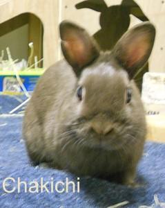 BB Chakichi