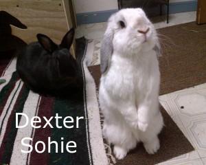 BB Dexter Sophie