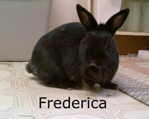 BB Frederica