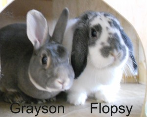 BB Grayson Flopsy