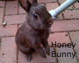 BB Honey Bunny