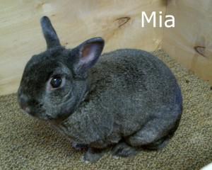 BB Mia