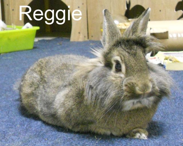 BB Reggie