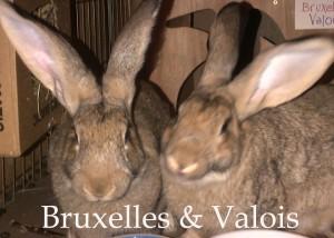 BB Valois Bruxelles