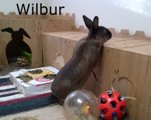 BB Wilbur