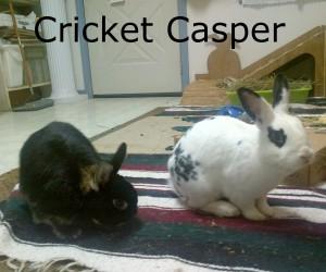 crick casper