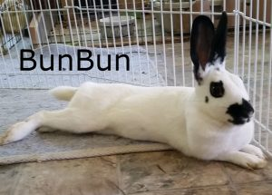 BB BunBun Spain
