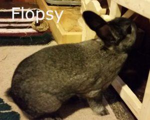 BB Flopsy