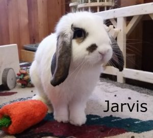 BB Jarvis