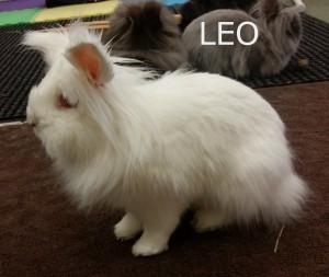 BB Leo