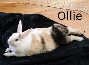 BB Ollie