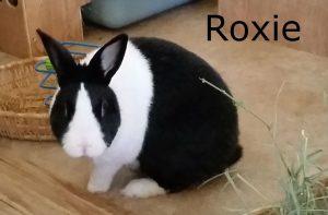 bb-roxie