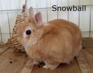 BB Snowball 2