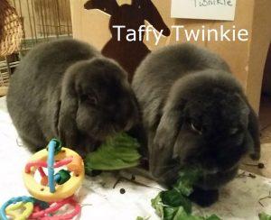 bb-taffy-twinkie