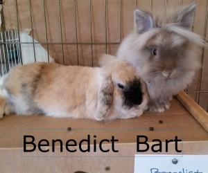 Benedict Bart