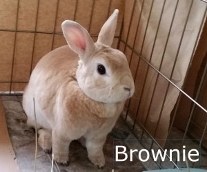Brownie2