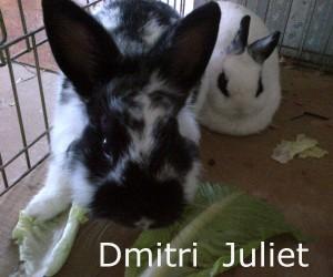 Dmitri juliet