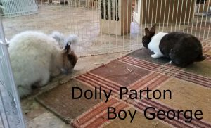 Dolly Parton Boy George