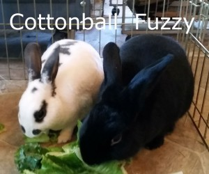 Fuzzy Cottonball