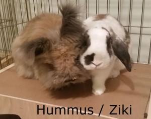 Hummus Ziki1