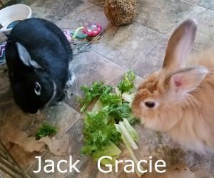 Jack Gracie