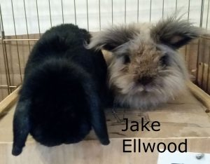 Jake Ellwood