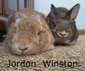 Jordon Winston
