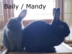 Mandy Baily1