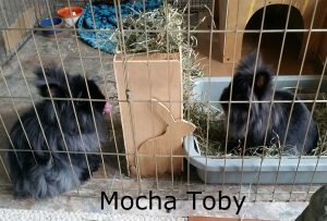 Mocha Toby eating
