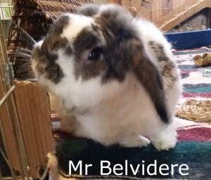 Mr Belvidere