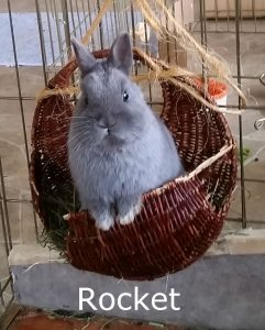 Rocket basket