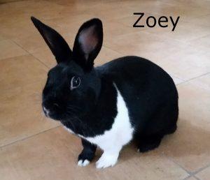 Zoey2