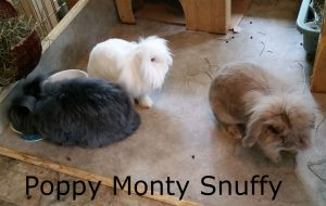 monty poppy snuffy