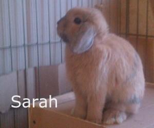 sarah standing
